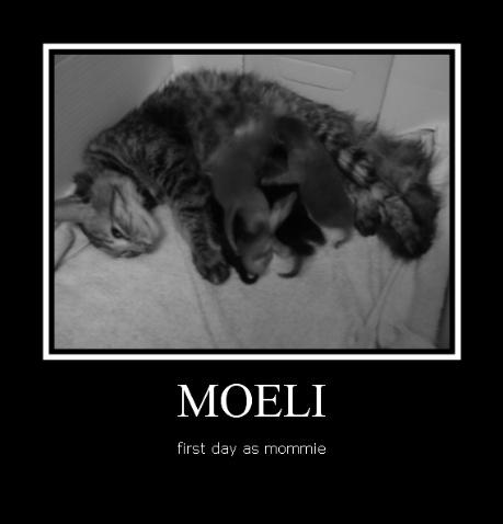 moeli-2