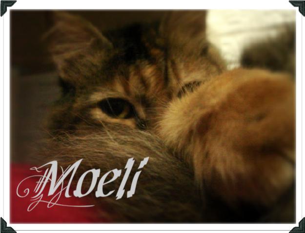 moeli